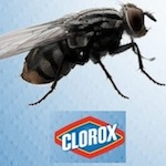 Thumbnail image for Clorox Latino's abuela has a few words for you; also, don't eat flies