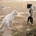 Thumbnail image for Watch: This may be the Internets' only ninja cat video en Español