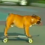 Thumbnail image for Un perro en Perú can haz mad skateboard skillz (video)