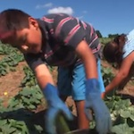 Thumbnail image for America's Shame : 12-year-olds pick our fruits, veggies (video)