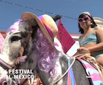 Thumbnail image for Donkey see, donkey do at Otumba's annual Burro Fair (video)