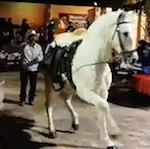 Thumbnail image for Happy Mexican Dancing Horse Day! (videos)