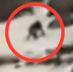 Thumbnail image for Mexican ski patrol spots El Bigfoot climbing Popocatepetl (video)