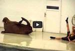 Thumbnail image for Goo goo goo joob: A walrus (who IS a marinero) baila 'La Bamba' (video)