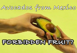 Thumbnail image for Are avocados from Mexico the 'Forbidden Fruit'? (video)