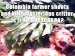 Thumbnail image for Colombia farmer kills mysterious critter: El Chupacabra? (video)