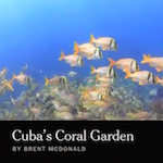 Thumbnail image for Watch: Cuba's underwater Jardines de la Reina are pristine – for now
