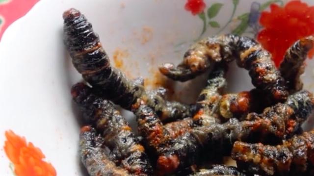 worm5